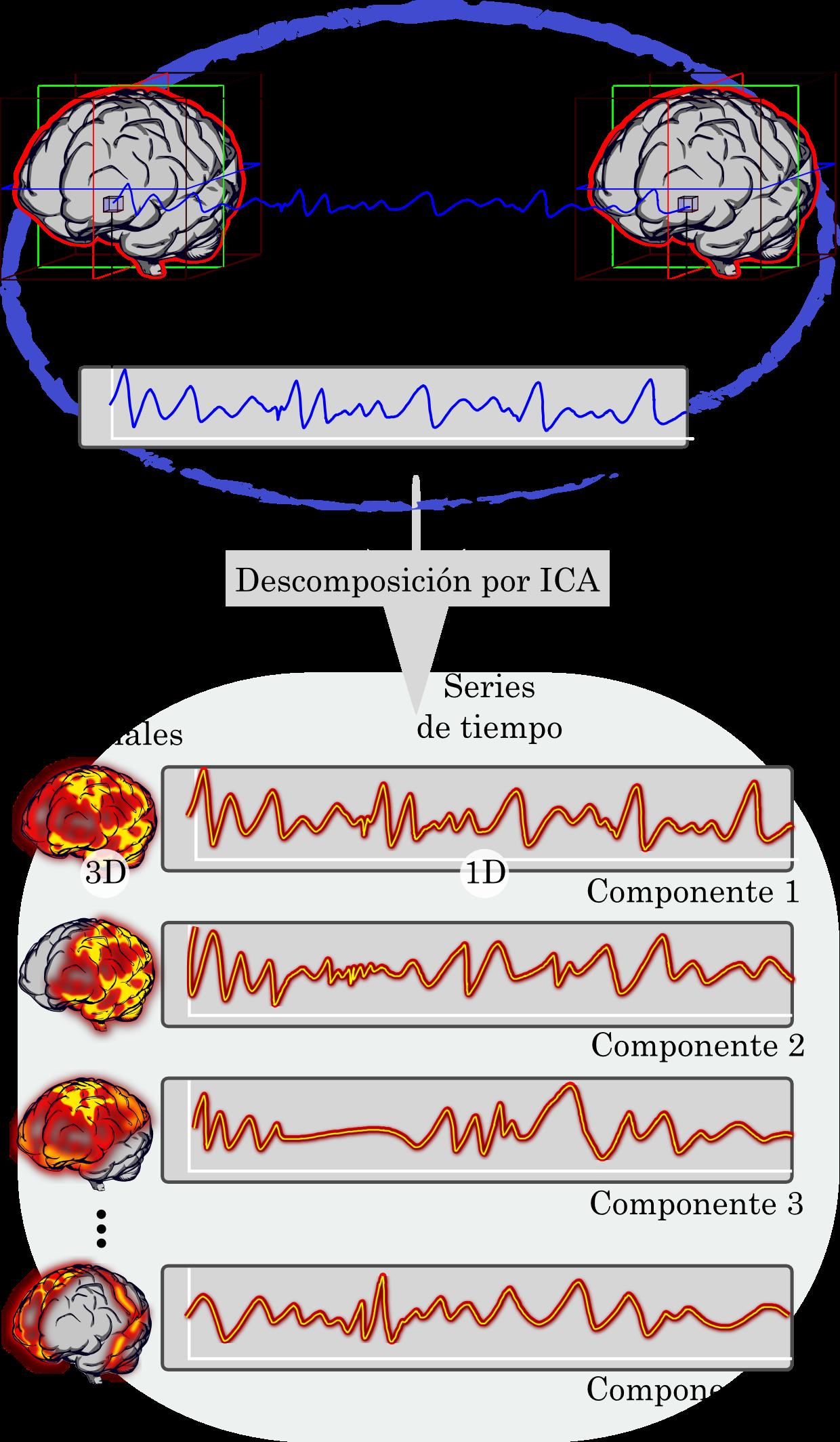 Representación de la descomposición por ICA en las componentes independientes de fMRI